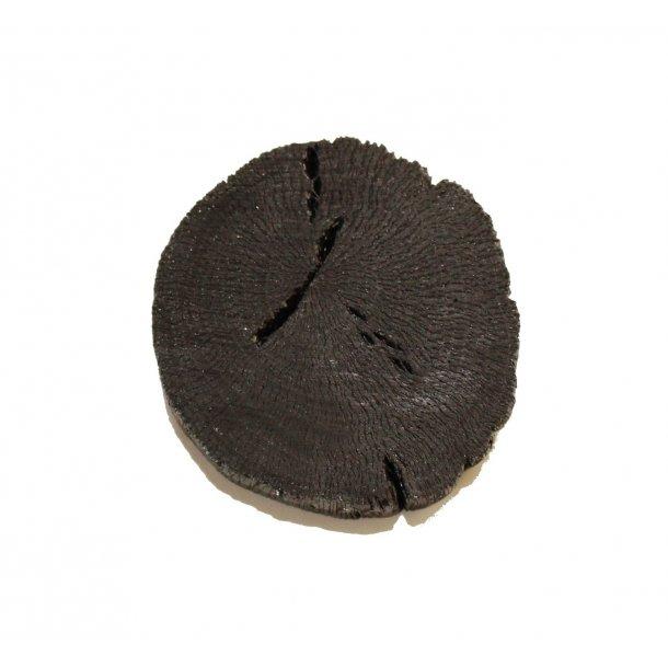 Lille Sumi Stykke af aktivt kul